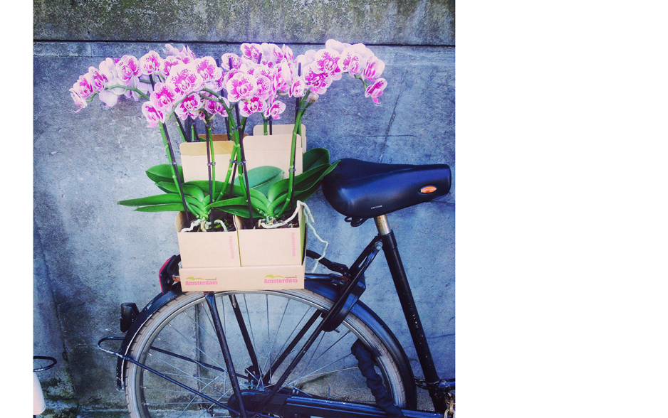 Orchidee - Daily Cappuccino - Lifestyle Blog