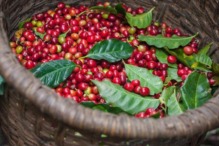 Duurzame koffieteelt - Daily Cappuccino - Lifestyle Blog