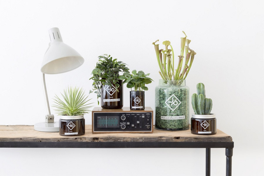 Vitamine Plant - Hutspot - Daily Cappuccino - Lifestyle Blog