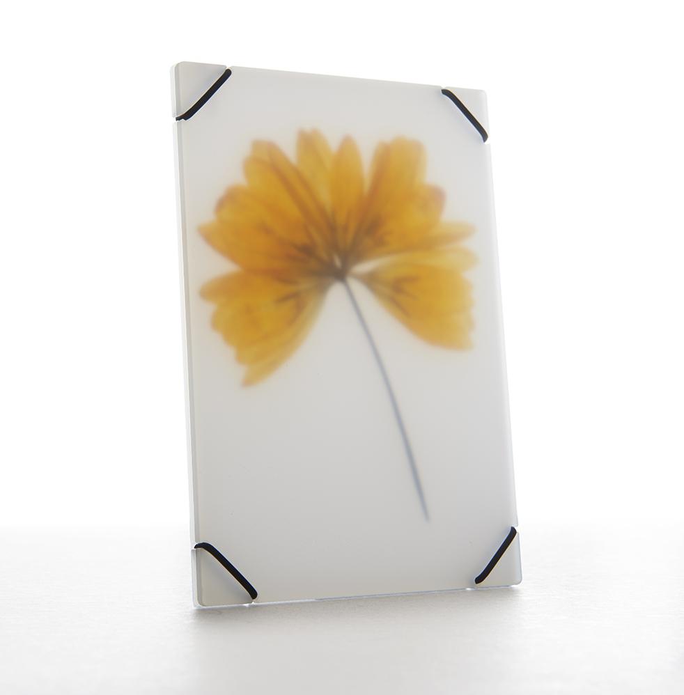 Pocket FlowerPress - Daily Cappuccino - Lifestyle Blog