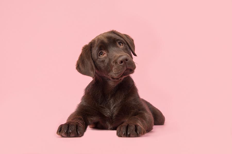 Waarom huisdieren een positieve invloed hebben op mensen - Daily Cappuccino - Lifestyle Blog