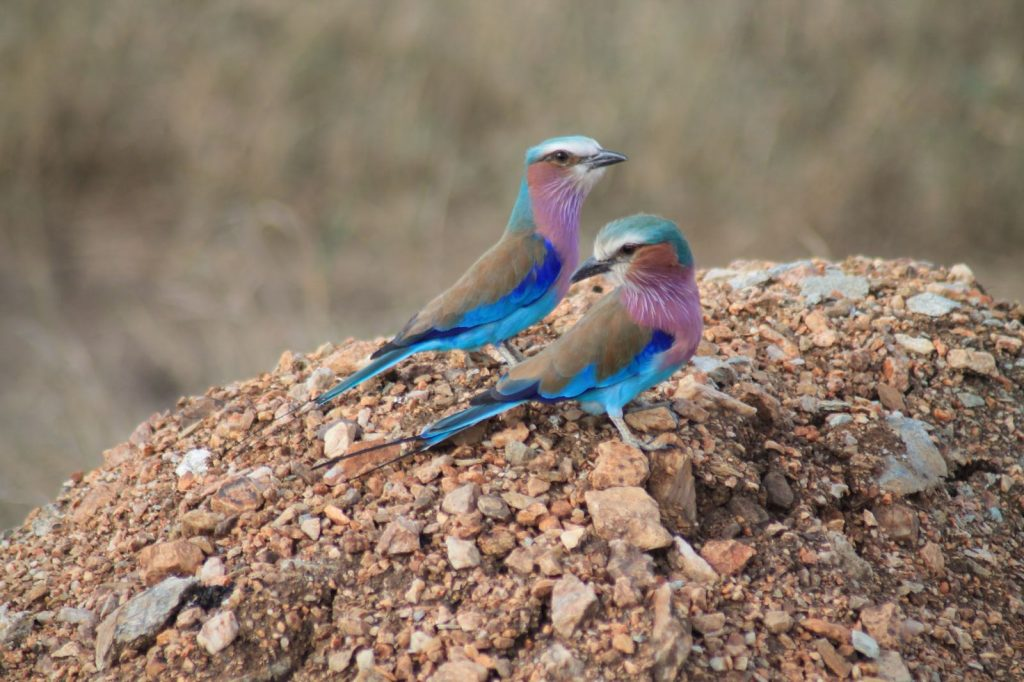 A bucket list kind of thing: op safari in Tanzania - Vogeltjes