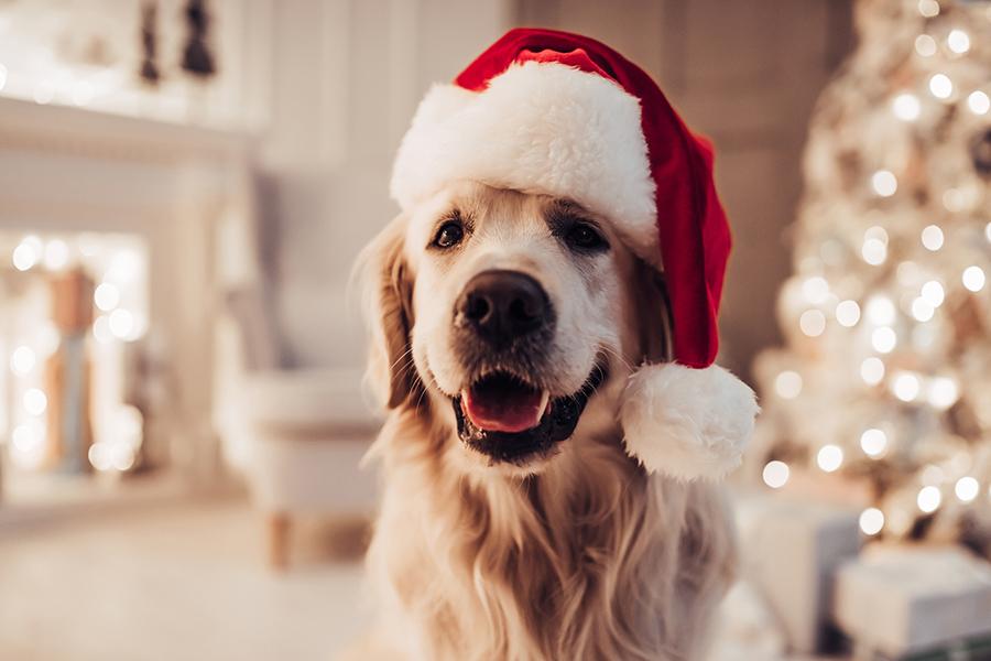 Eén vijfde Nederlanders geeft huisdier kerstlook!