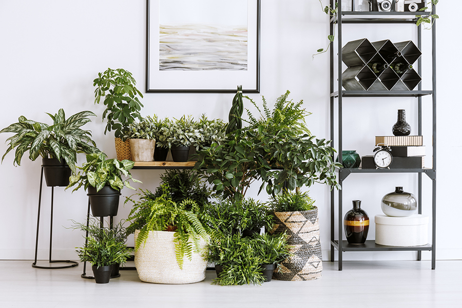 Inspiratie: DIY urban jungle