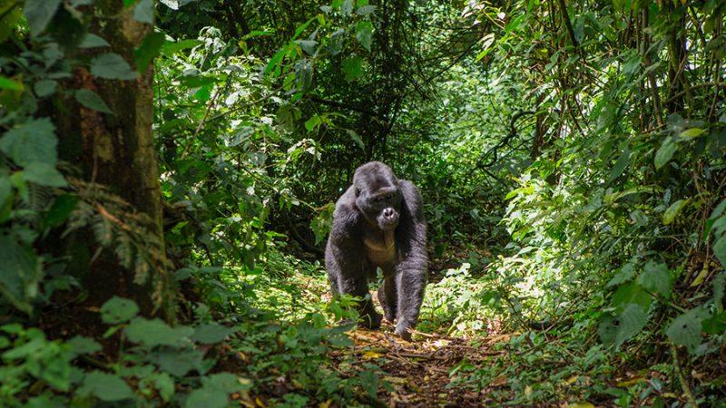 4 x de mooiste natuurparken in indrukwekkend Rwanda