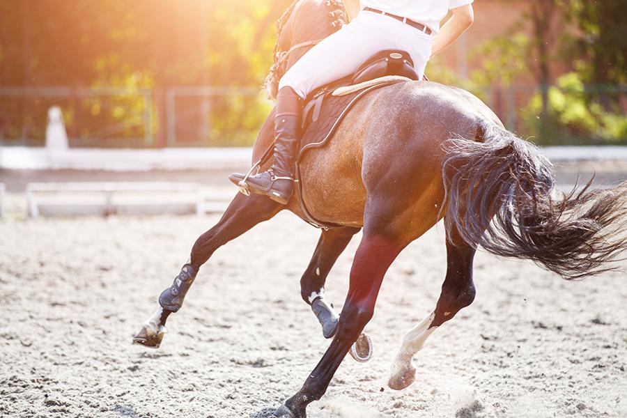Waarom paardrijden als sport een aanrader is