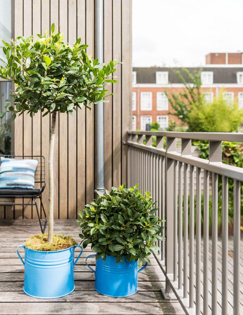 Tromgeroffel... Dit zijn dé balkon- en terrasplant van 2019!