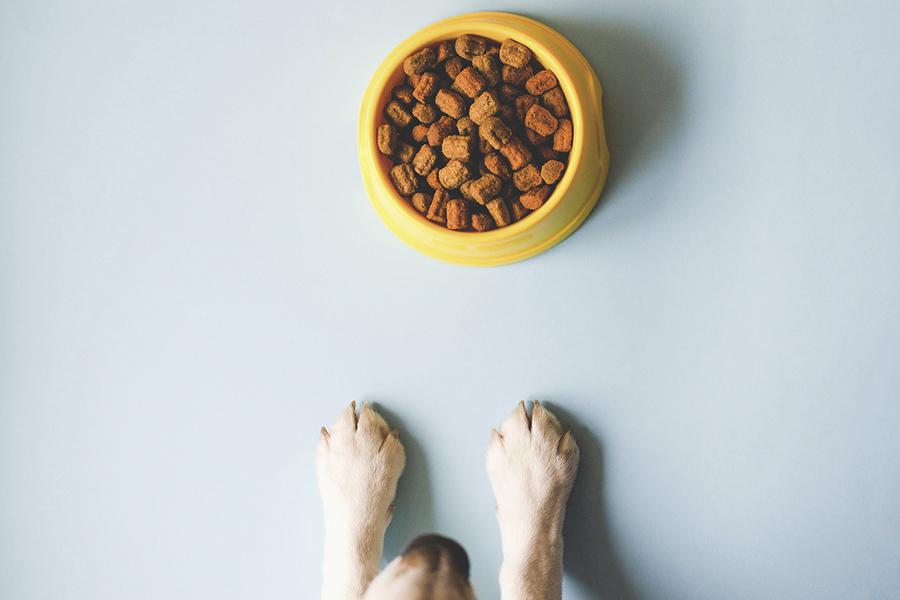 Blaffende honden bijten niet, maar hongerige.... Lees hier wat het állerbeste voer voor jouw viervoeter is