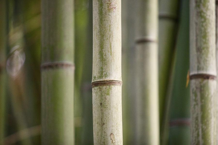 Bamboe, waarom het zo'n goed duurzaam alternatief is