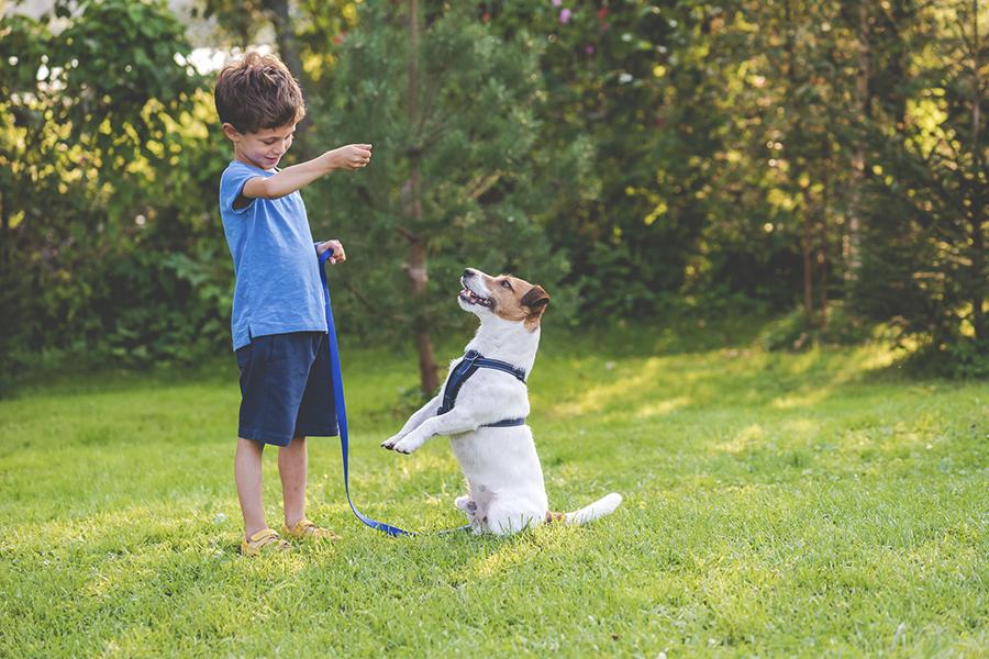 Zo maak je je tuin buiten-speel-proof - buiten spelen