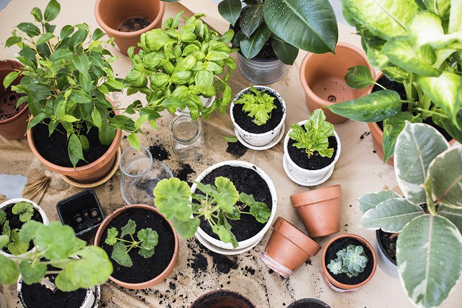 Tips voor wat extra liefde voor onze kamerplanten in deze tijd