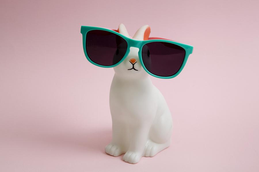 Huisdieren, zoals konijnen, populair in coronatijd