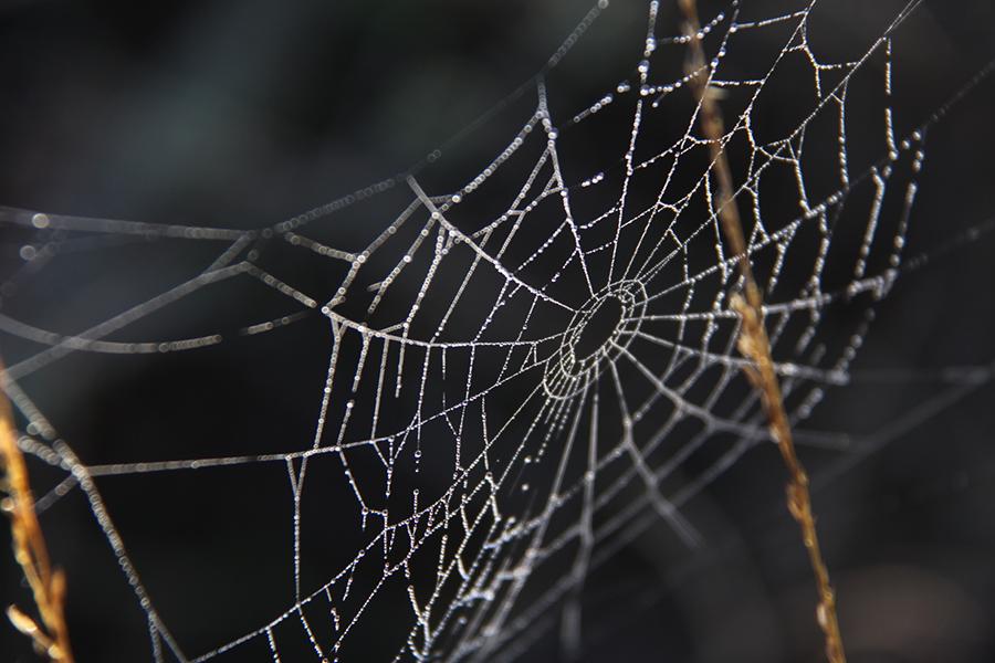 Het spinnen seizoen is geopend!
