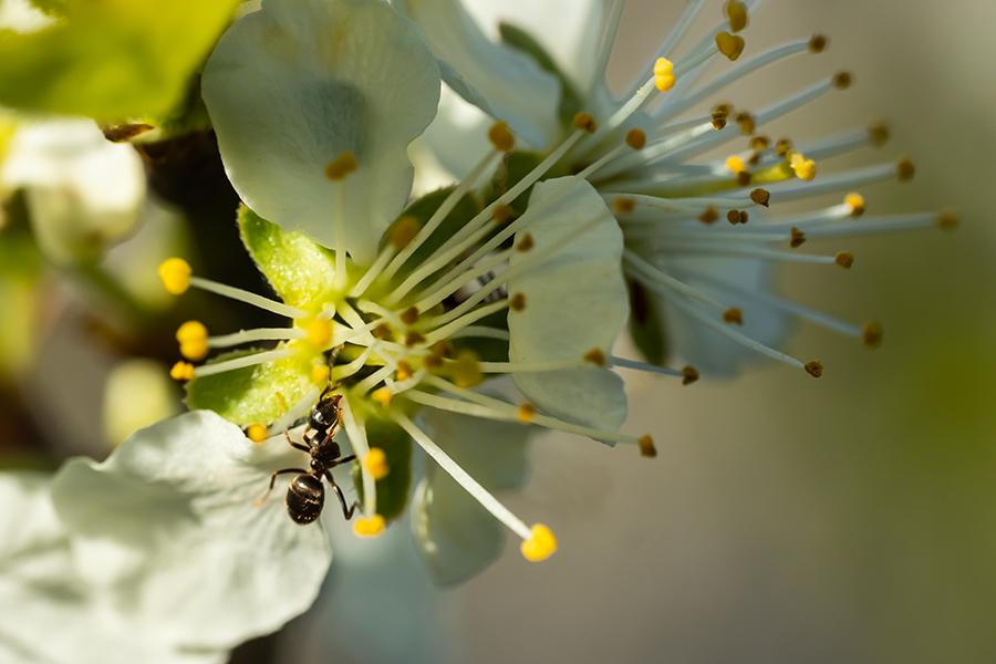 De (kleine) ongeneugten van de lente: mieren