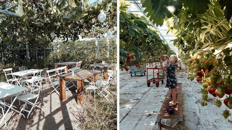 Op de koffie op het 'platteland': 4 x de leukste streekwinkels in Nederland