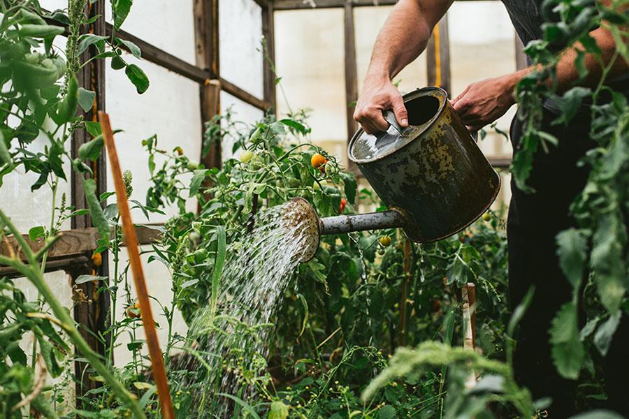 Jouw planten altijd de perfecte hoeveelheid water geven