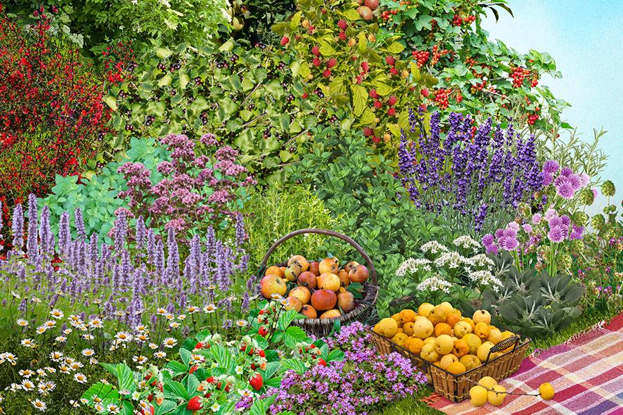 Een eigen, kant en klaar (mini) voedselbos in je tuin